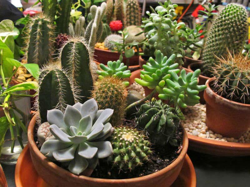 Cactus-and-Succulent-Garden