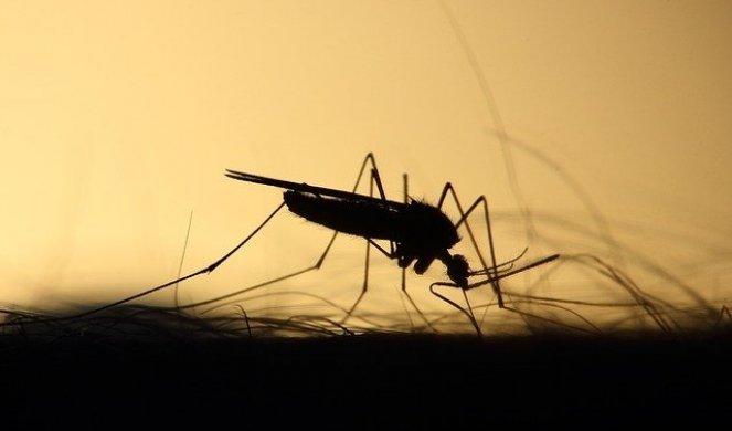 339127_mosquito-3860900-640_f