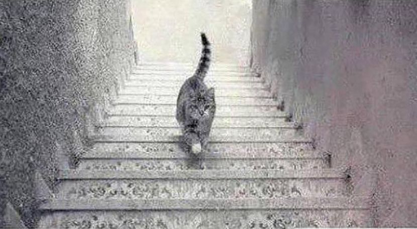 cat-stairs-830x0