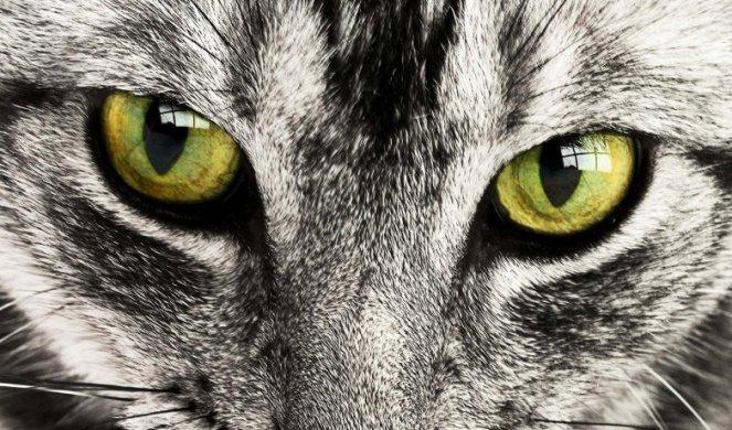 431296_cat-114782-1920_f